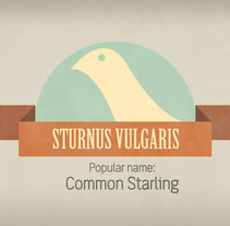 Starling. A Design, Motion Graphics&Illustration project by Nonoray - 12.01.2011