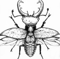 Beetle. A Illustration project by Ana Marín - Nov 29 2013 12:00 AM