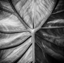 Leafscapes. A Photograph project by Xaime Aneiros - Dec 01 2013 12:00 AM