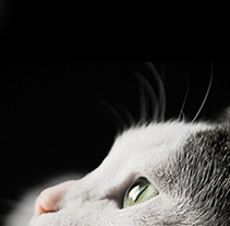 White Cat. Cartel promocional.. A Graphic Design project by Chakrani - 14-04-2013