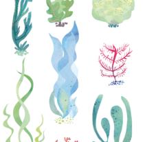 Algas_Estampado. Un proyecto de Ilustración y Diseño de producto de Sandra Uve  - 22-03-2016